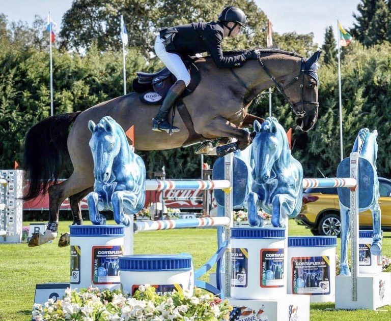 Man Showjumping On A Brown Horse
