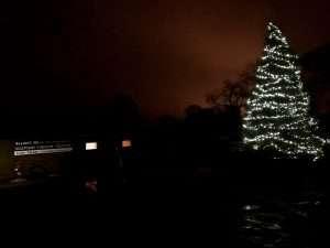 Christmas Tree In Field