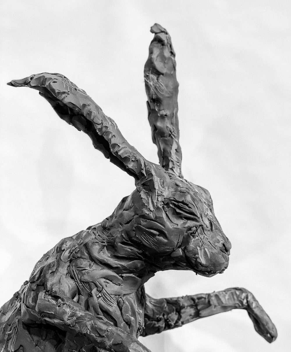 Boxing Hares 2020 head shot
